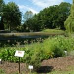 Interaktywny Botanik w ArcGIS Online
