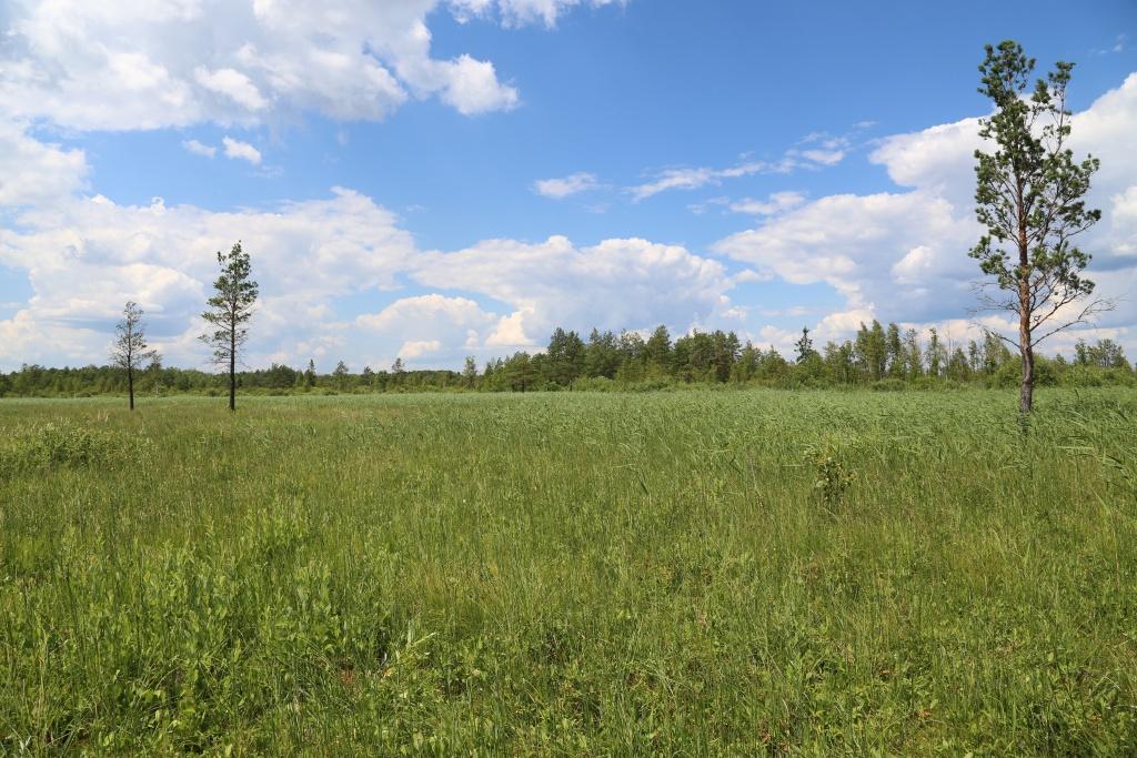 Fot. 1. Torfowisko zasadowe (kod siedliska: 7230) – rozległy płat dobrze zachowanego siedliska (fot. D. Kopeć, 10 lipca 2014 roku).