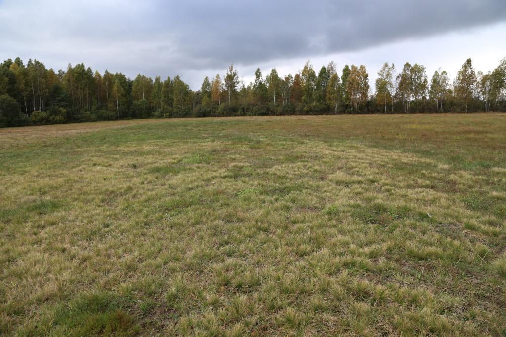 Fot. 2. Murawa bliźniczkowa (kod siedliska: 6230) – w płacie dominacja jasnoszarej kępkowej trawy bliźniczki psiej trawki (fot. D. Kopeć, 1 października 2013 roku).