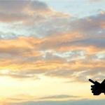 Drone2Map for ArcGIS – wykorzystaj swojego drona