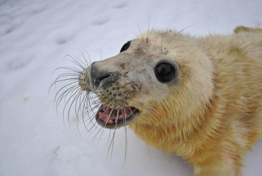 fot-3-koga-mloda-foka-urodzona-w-fokarium-w-2011-roku