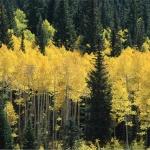 LEMAN - środowisko wspierające tworzenie map leśnych