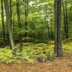 Parki krajobrazowe 2.0