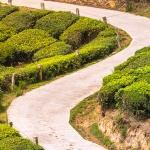 Jak GIS wspomaga rolnictwo