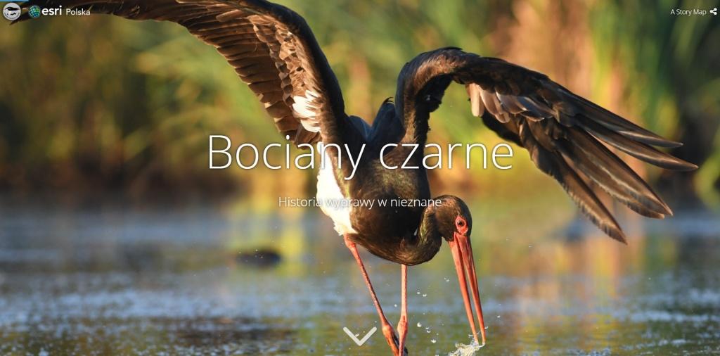 Rys. 1. Bociany Czarne - https://www.arcanagis.pl/living-atlas-of-the-world-czyli-zyjacy-atlas-swiata-esri/