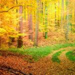 Geoinformatyczne monitorowanie dynamiki wtórnej sukcesji leśnej