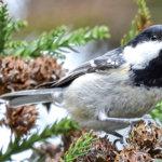 Ocena względnego ryzyka wystąpienia grypy ptaków na obszarze Polski