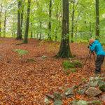 Aktywność na terenie polskich lasów oczami danych społecznościowej informacji geograficznej (VGIS)
